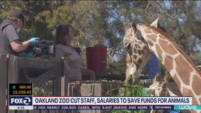 Oakland zoo lays off employees, zookeepers and execs see pay cuts