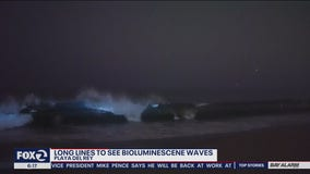 Crowds in California violate stay-at-home orders to see explosion of neon blue waves