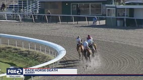 Horse dies while training at Golden Gate Fields