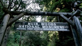 Muir Woods adjusts open hours, reopens some previously closed areas