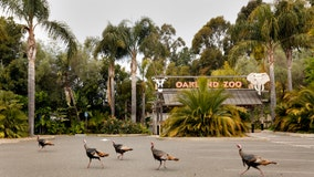 Oakland Zoo reopens after more than four months of heeding shelter-in-place orders