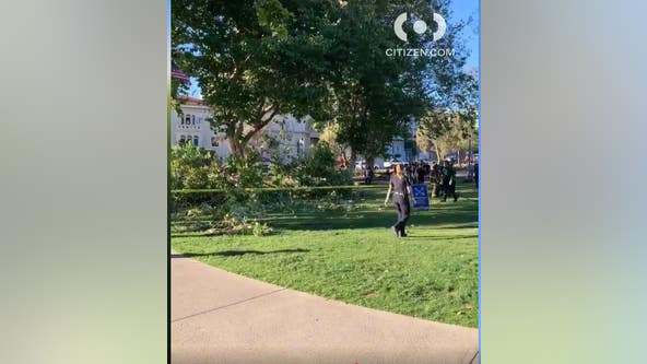 5 hurt as tree limb falls at San Francisco park