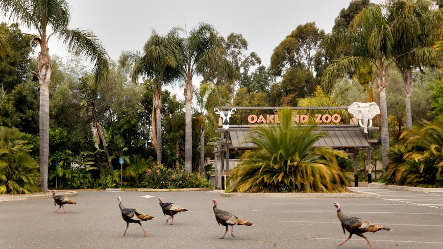 Oakland Zoo reopening pending as county files COVID-19 variance request with state