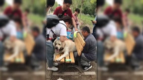 Retired police dog rescued after getting stuck in park bench