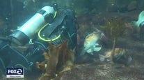 SF's Aquarium of the Bay struggles to survive COVID-19 closure