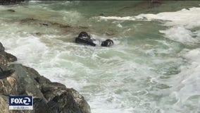 Carjacking suspect held after driving off Santa Cruz cliff