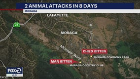 2 animal attacks in 8 days
