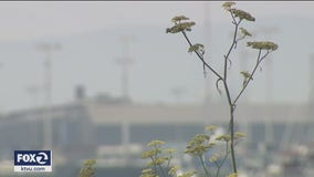 Bay Area suffers 6th consecutive day of unhealthy air quality readings