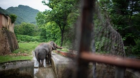 'World's loneliest elephant' living in abysmal conditions gets new chance at better life