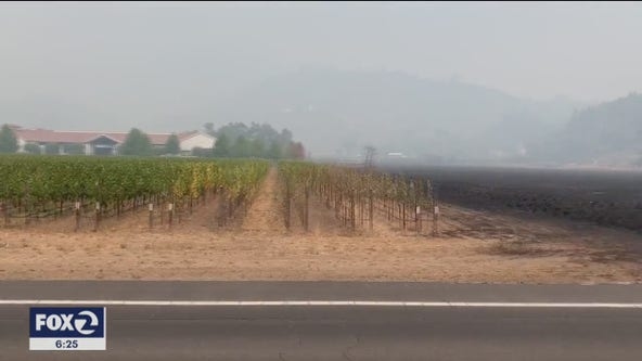 Fire impact on wine country tourism