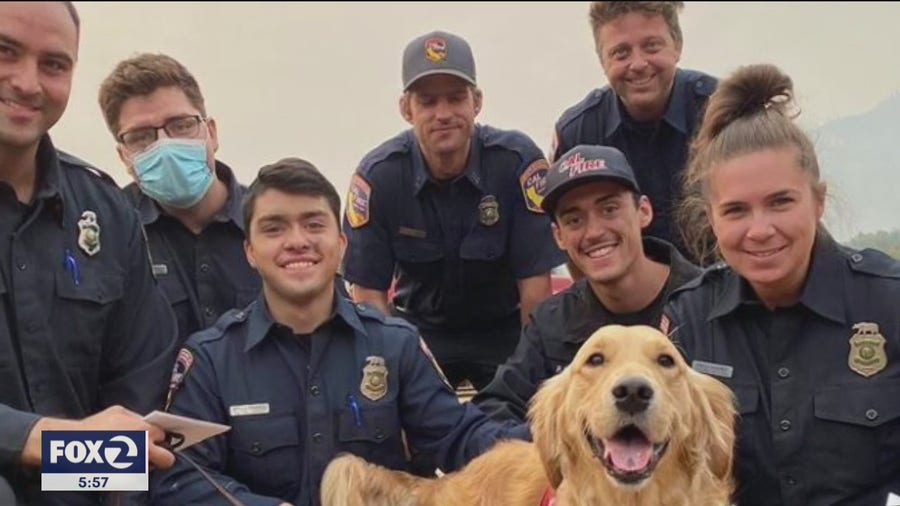 Golden retriever helps frontline firefighters cope with trying times