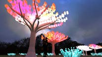 SF's Golden Gate Park to become 'enchanted forest' of lights for 150th anniversary