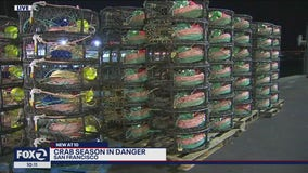 Concerns over endangered whales could delay commercial crab season