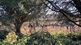 Human remains discovered at San Bruno Mountain