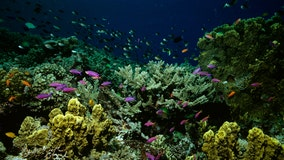 Climate change has killed half of the Great Barrier Reef's corals, study finds