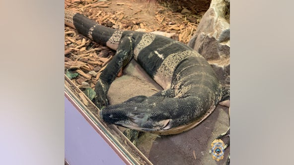 California police recover lizards stolen year ago, worth $75K