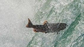 Over $10M granted to preserve California's salmon habitats