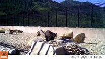 Parleys Canyon wildlife crossing in Utah