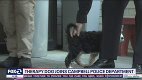 Campbell police have new therapy puppy