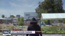 City Slicker Farms
