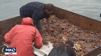 Late start to crab season proves to be not as lucrative