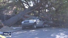 Weird winter windstorm leaves path of destruction