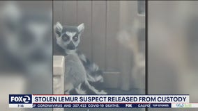 Man suspected of stealing San Francisco lemur released from custody