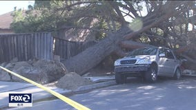 Rare winter windstorm batters the Bay Area