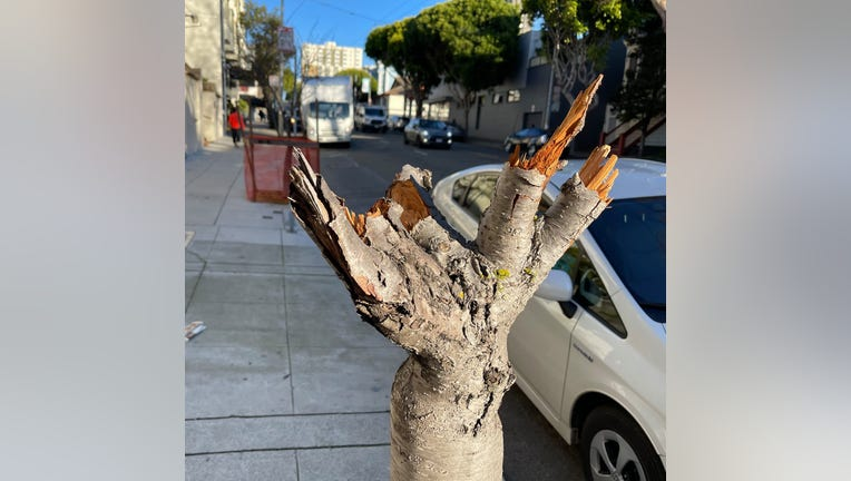 Japantown Leaders Call For Vandalized Cherry Blossom Trees To Be Replaced