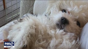 Woman devastated after puppy stolen from car in San Francisco
