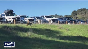 5th coyote attack in East Bay