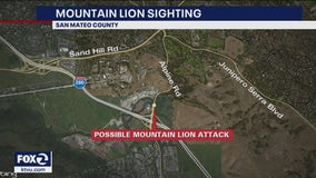 Deputies say dog may have been attacked by mountain lion near Portola Valley