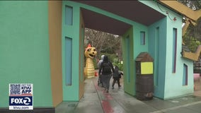 Bay Area families eager to get out can enjoy these newly reopened attractions