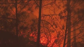 Report: California wildfire sparked when tree hit power line
