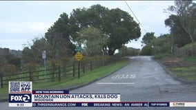 Dog survives mountain lion attack in Woodside, sheriff says