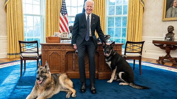 President Biden's dog Major gets professional training following biting incidents