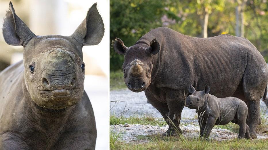 zoo-miami-baby-rhino-1.jpg