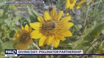 Giving Day: Pollinator Partnership