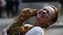 National Pet Day: Celebrate your best friend with these films and documentaries