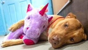 Dog who repeatedly stole stuffed unicorn from dollar store gets adopted