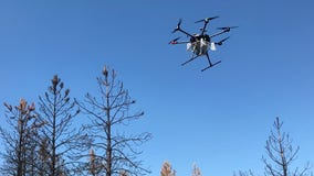Drones dropping tree seeds, soil over forests ravaged by fire