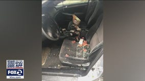 Muslim security guard in San Rafael says her car was vandalized with pig's feet and bacon
