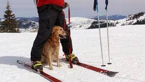 Paw patrol: Meet Lake Tahoe's four-legged heroes