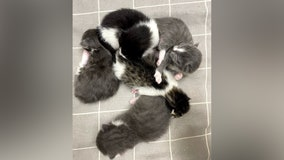 Community rallies together to help reunite litter of stolen kittens with mom