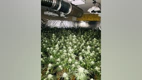 Tip leads to the discovery of five marijuana grow houses in Fairfield