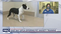 Bay Area animal shelter helping pets cope with separation anxiety