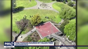One person injured by falling tree in San Francisco