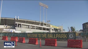 Longtime, loyal Oakland A's fans don't want to see their team leave