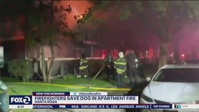 Dog rescued from Santa Rosa apartment building fire