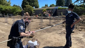 Peninsula Humane Society & SPCA rescue 3 skunks from 14-foot hole at Menlo Park construction site